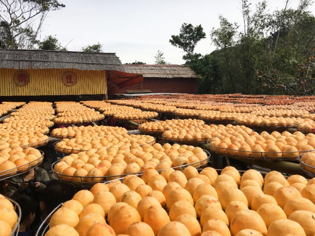 入秋,「柿柿」如意,自由行包車,就柿愛你。